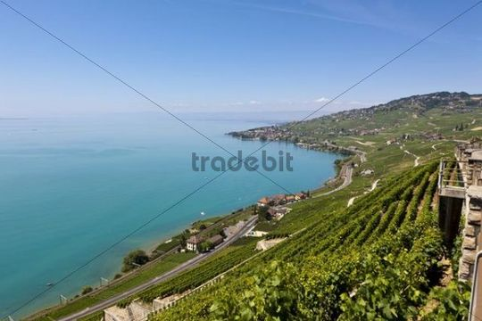 View across the vineyards towards the village of Cully, Lake Geneva at back, Canton Vaud, Lake Geneva, Switzerland, Europe