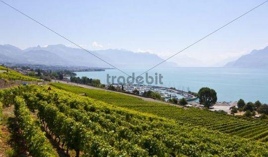 View across the vineyards to Vevey, Lake Geneva at back, Vevey, Canon Vaud, Lake Geneva, Switzerland, Europe