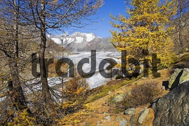 Aletsch Glacier, Valais, Switzerland