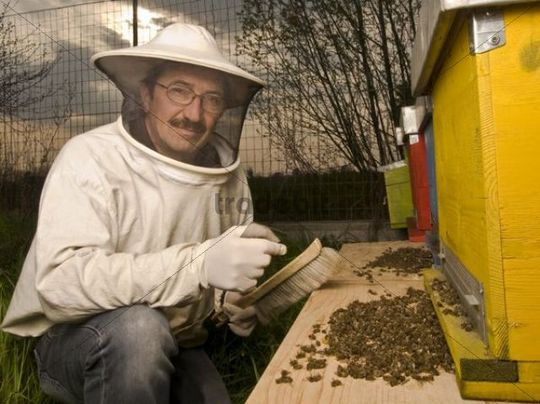 A beekeeper with dead bees, Italy, Europe