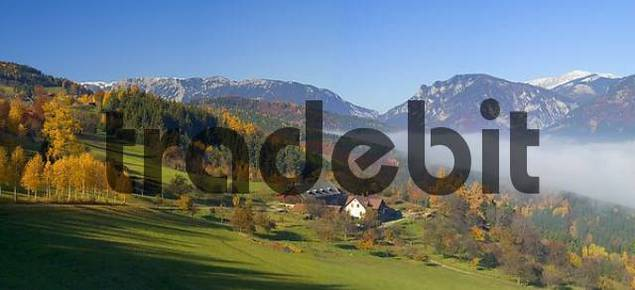 fall foliage of birch trees leading to a farmhouse in the background the mountains Rax and Schneeberg Lower Austria