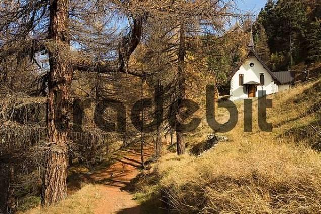 Ryffelalp Chapel larches Zermatt, Valais, Switzerland