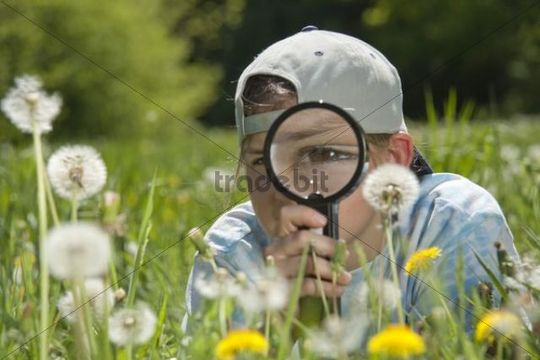 Girl inspecting dandelion clocks through a magnifying glass