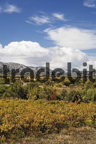 Katharo Plateau, Katharos Plateau near Kritsa, Eastern Crete, Greece