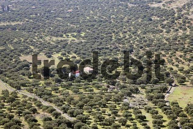 olive plantaions and church in Kastelli Plateau, Eastern Crete, Greece