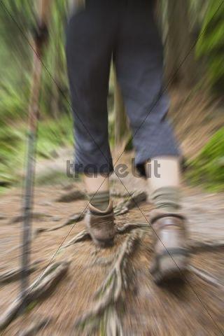 Close-up, legs of a hiker, Saxon Switzerland, Saxony, Germany, Europe