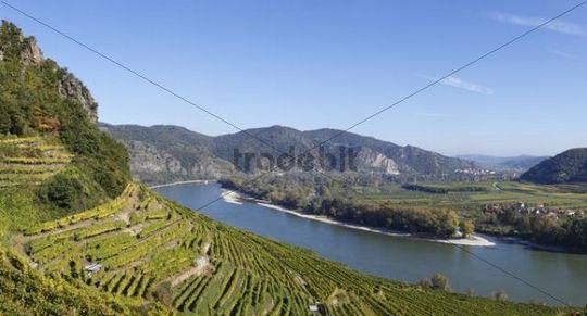 Achleiten vineyards near Weissenkirchen, Donau-Auen Venedigau, Wachau, Waldviertel, Forest Quarter, Lower Austria, Austria, Europe