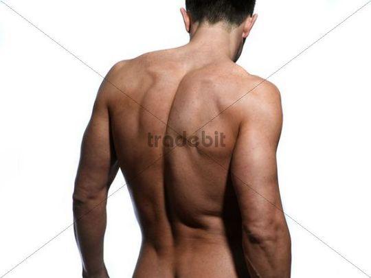 Athletischer Mann, Rücken, Schultern - Runterladen Leute
