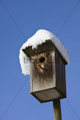 Nestbox in winter with snow, Bavaria, Germany, Europe