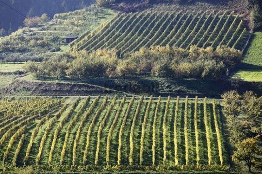 Cultural landscape with a vineyard and an orchard in Viessling, Spitzer Graben valley, Wachau valley, Waldviertel region, Lower Austria, Austria, Europe