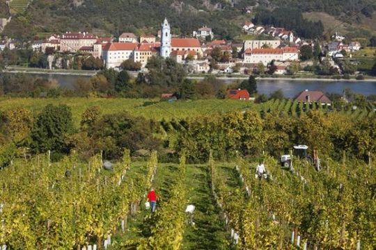 Duernstein, view over vineyards near Rossatz and the Danube river, Wachau valley, Waldviertel region, Mostviertel region, Lower Austria, Austria, Europe