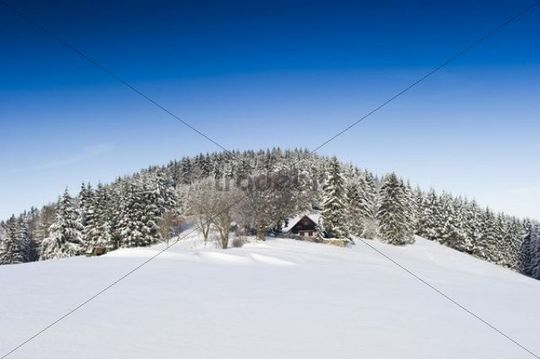 Snow-covered firs and a lodge in the southern Black Forest mountain range, Baden-Wuerttemberg, Germany, Europe