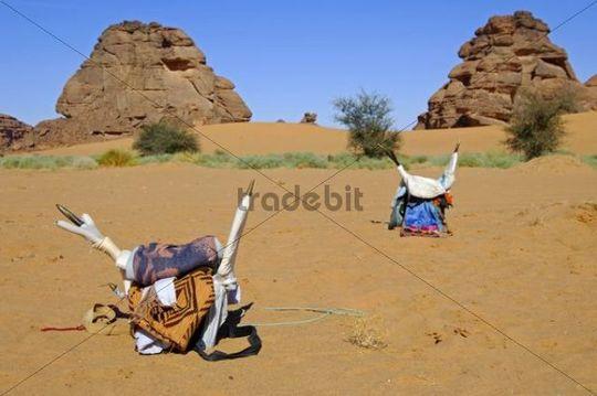 Traditional saddle for camel riding of the Tuareg nomads sitting on the desert sands, Sahara, Libya, North Africa