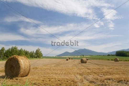 Straw bales on a harvested field, Furano, Hokkaido, Japan, Asia