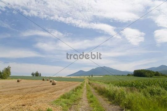 Track, farmland, Furano, Hokkaido, Japan, Asia
