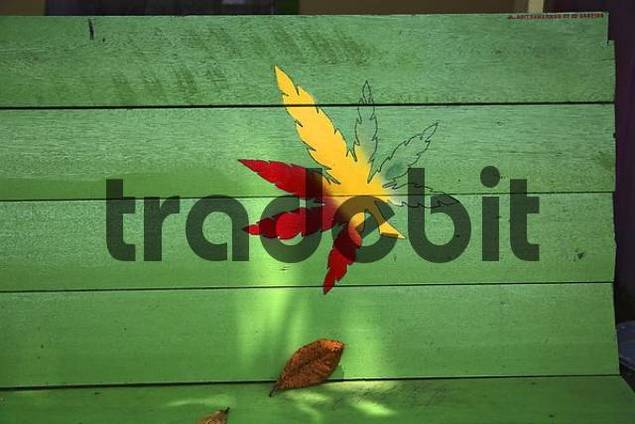 Cannabis leaf on banquette, Tenggarong, East-Kalimantan, Borneo, Indonesia