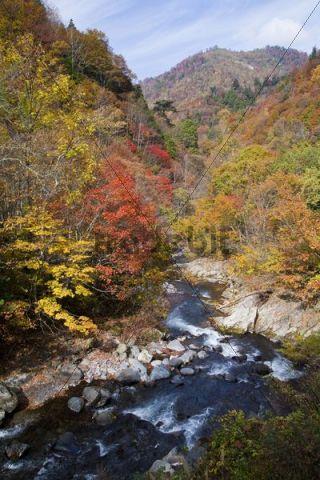 River, autumn, Tochigi, Japan, Asia