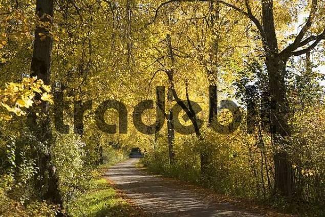 linden avenue, Geretsried, Bavaria, Germany
