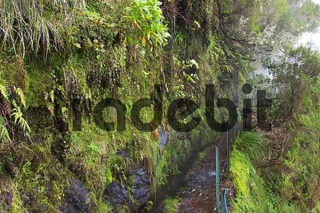 Levada do Caldeirao Verde - irrigation channel and footpath - Madeira