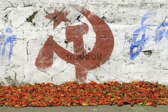 Chili peppers and campaigning for the Communist Party, Munnar, Kerala, South India, India, Asia