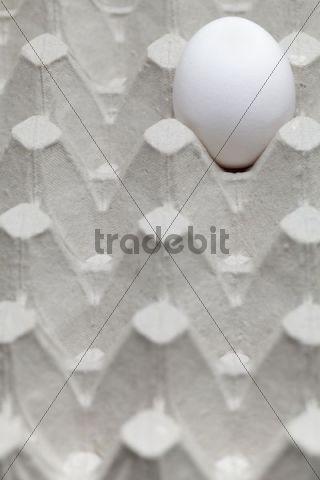 Single egg in an egg carton