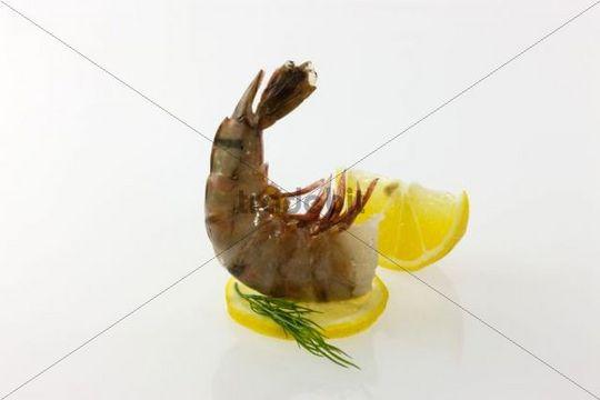 Raw Black Tiger Prawn (Penaeus monodon), headless shrimp with lemon and dill ready for preparation