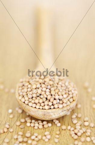 Yellow mustard seeds on wooden spoon