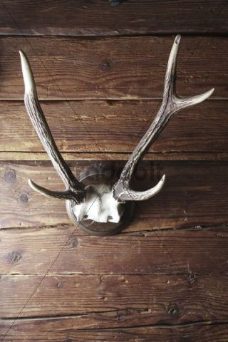 Old Antlers Hanging On A Rustic Wooden Wall Download