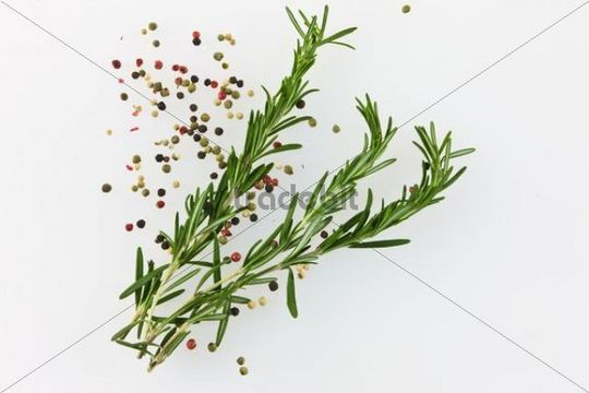 Fresh Rosemary (Rosmarinus officinalis), with red and black pepper