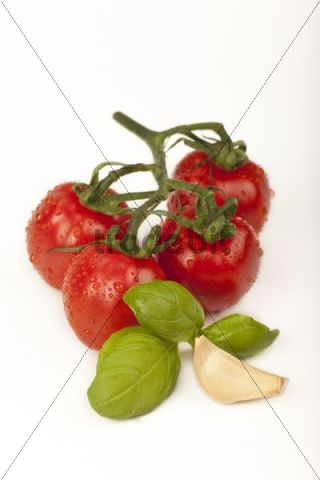 Cherry tomatoes with basil and clove of garlic