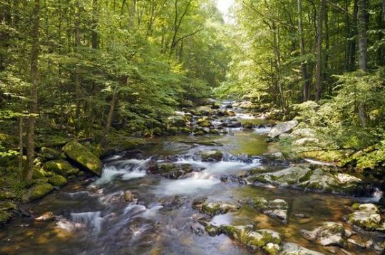 Big Creek, Great Smoky Mountains National Park, UNESCO World Heritage Site, North Carolina, USA, America