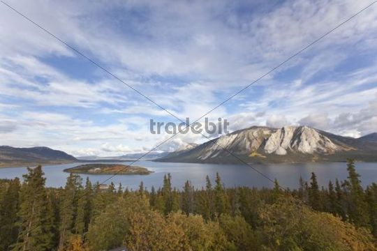 Bove Island in Indian summer, leaves in fall colours, autumn, Windy Arm of Tagish Lake, South Klondike Highway, Yukon Territory, Canada