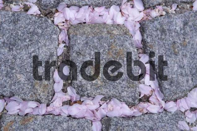 pavement with leaves of magnolia Gmunden Upper Austria Austria