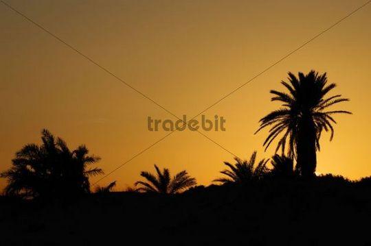 Palm trees on the Flamingo Island Ras R´mel, Djerba, Tunisia, Maghreb, North Africa, Africa
