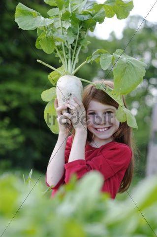 Girl holding a freshly harvested radish (Raphanus)