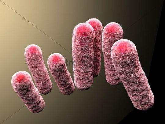 3d-rendering, enterobacteriaceae, bacteria