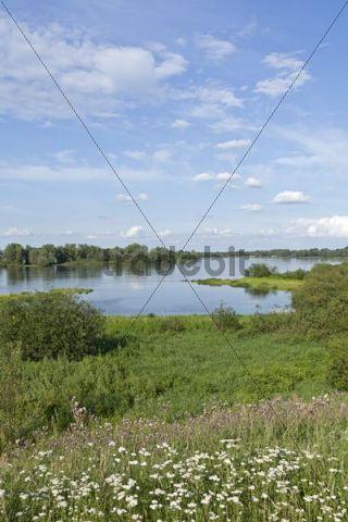 Elbe River near Hitzacker, Elbhoehen-Wendland Nature Park, Lower Saxony, Germany, Europe