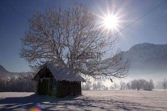 Winter landscape in Kocheler Moos in front of Herzogstand mountain, Bavaria, Germany, Europe
