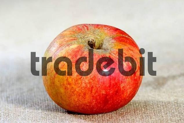 Apple sort Goldparmäne