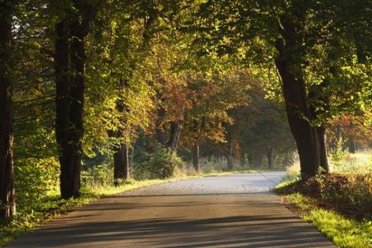 Autumnal avenue near Eurasburg, Upper Bavaria, Bavaria, Germany, Europe, PublicGround