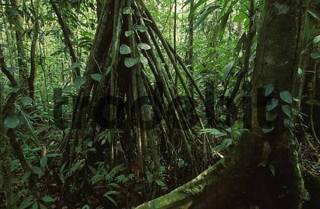 rainforest Llanura de San Carlos - Costa Rica