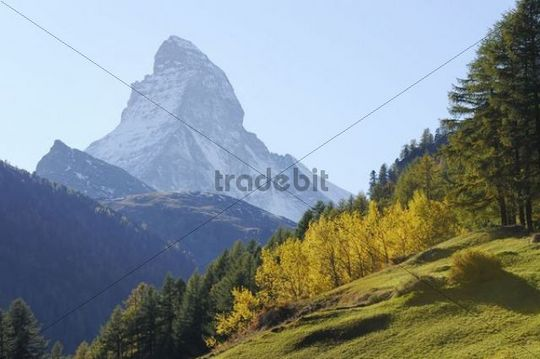 Matterhorn in an autumnal area, Zermatt, Valais, Switzerland, Europe