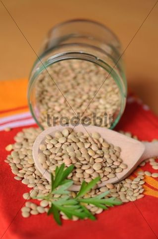 Lentils in a glass with a wooden spoon
