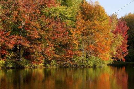 Trees in autumnal colours reflected in lake, Iron Hill, Quebec, Canada