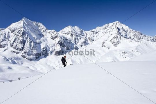 Ski tourer climbing up Mt Hintere Schoentaufspitze or Punta Beltovo di Dentro, Sulden, Solda, in winter, Mt Gran Zebru, Mt Ortles and Mt Zebru in the back, South Tyrol, Italy, Europe