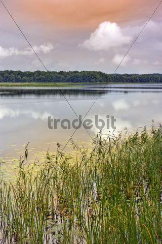 Linkmenas Lake, Aukstaitijos National Park, Lithuania, Europe