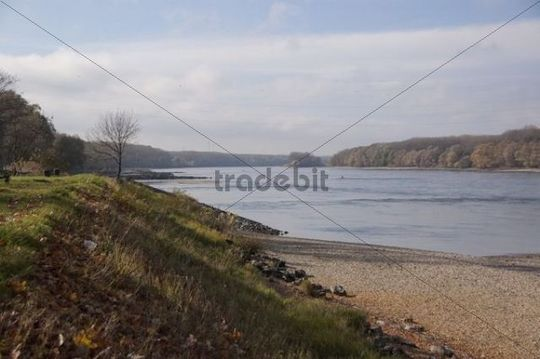 View along the Danube River, Donau-Auen Nature Park, Deutsch Altenburg, Lower Austria, Austria, Europe