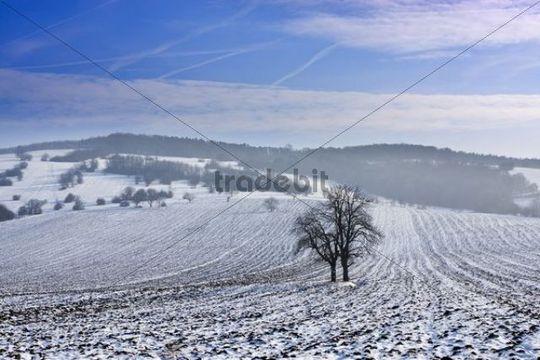 Winter landscape near Knezdub, Bile Karpaty, White Carpathian Mountains Protected Landscape Area, Southern Moravia, Czech Republic, Europe