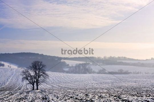 Winter landscape near Knezdub, Bile Karpaty, White Carpathian Mountains Protected Landscape Area, Southern Moravia, Czech Republic, Europe