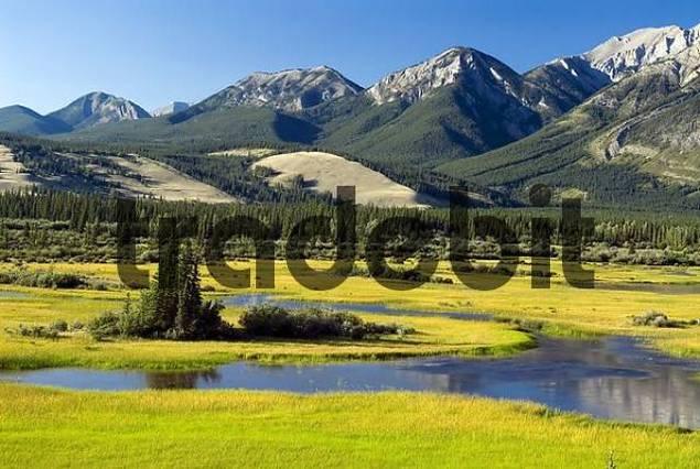 montane wetlands Pocahontas Ponds along Athabasca River, Athabasca Valley, Jasper National Park, Alberta, Canada